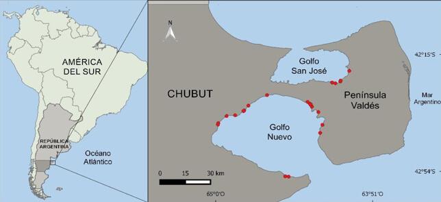 Mapa de varamientos de ballenas en Península Valdés